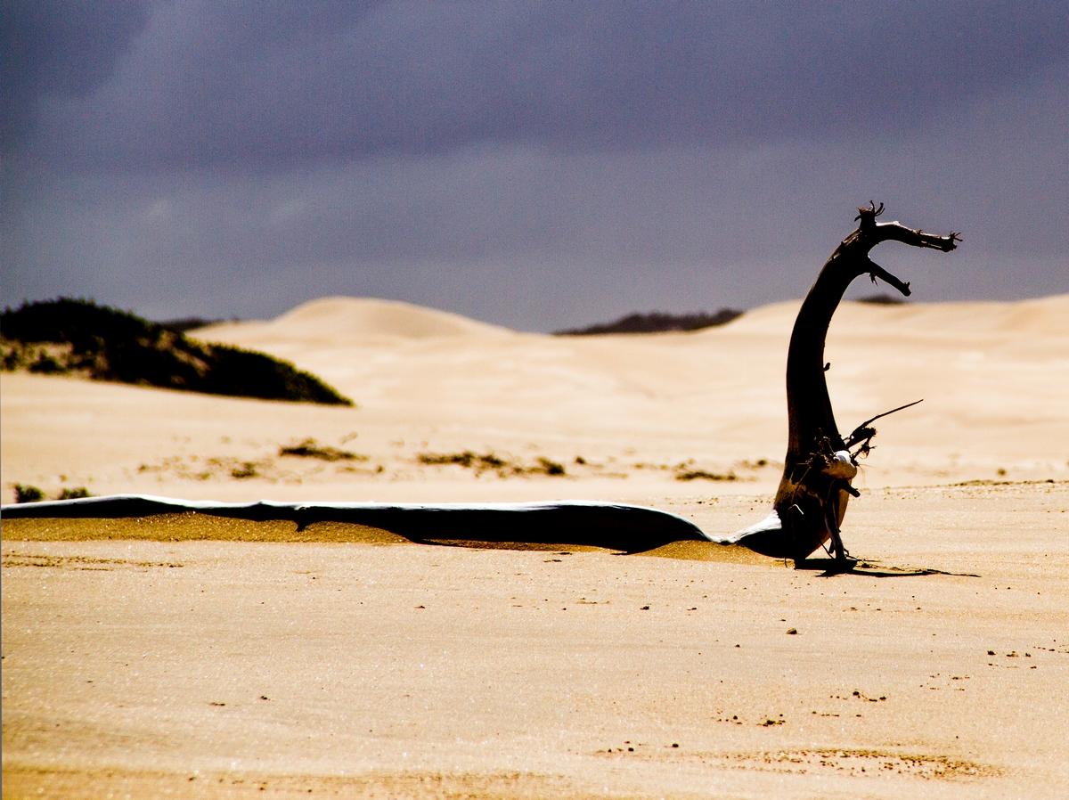 Hölzernes Ungeheuer am Strand von Port Elizabeth