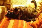 Hör schnell auf!! Frauchen beobachtet uns beim Katzensex