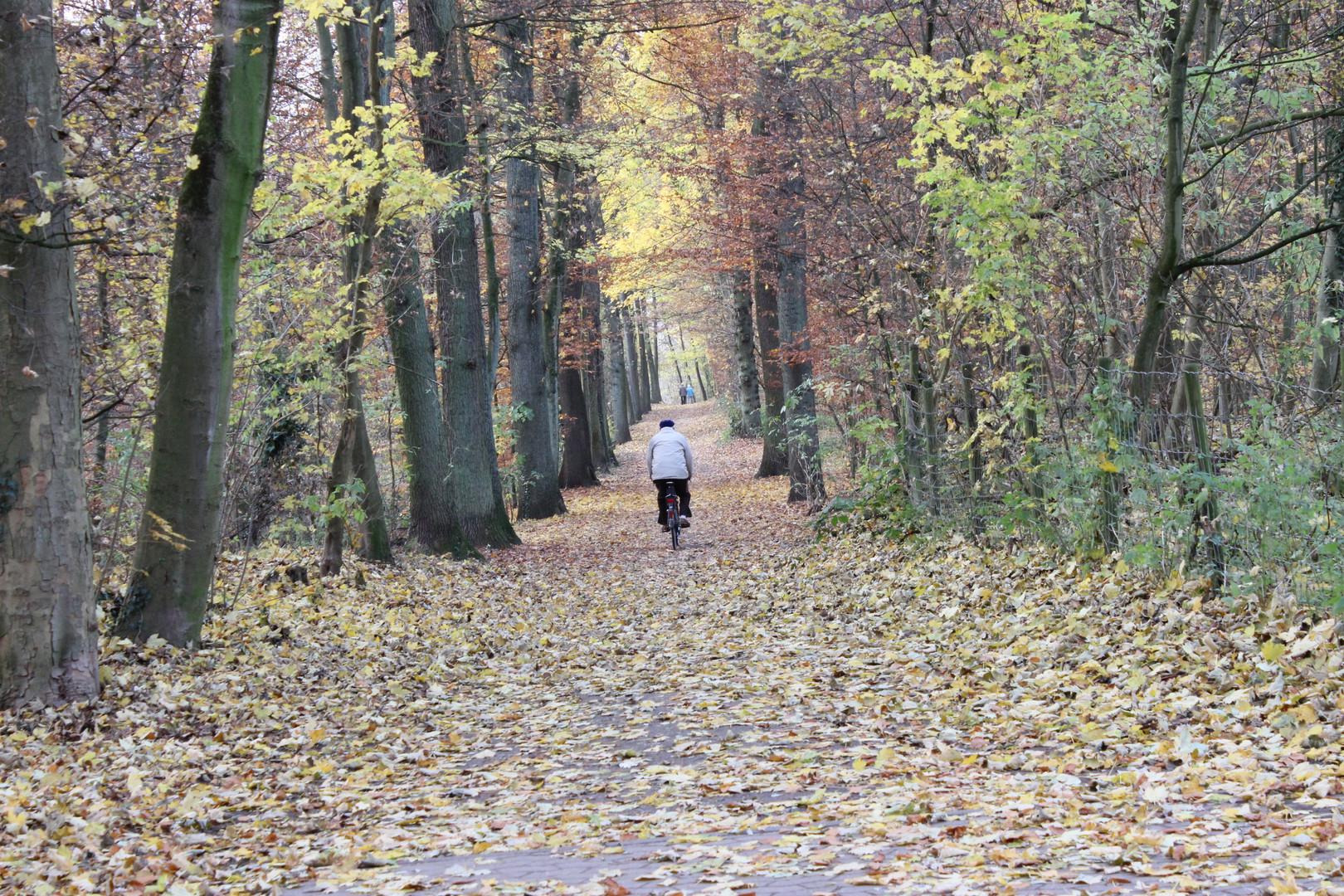 Höre die Lieder der Blätter...
