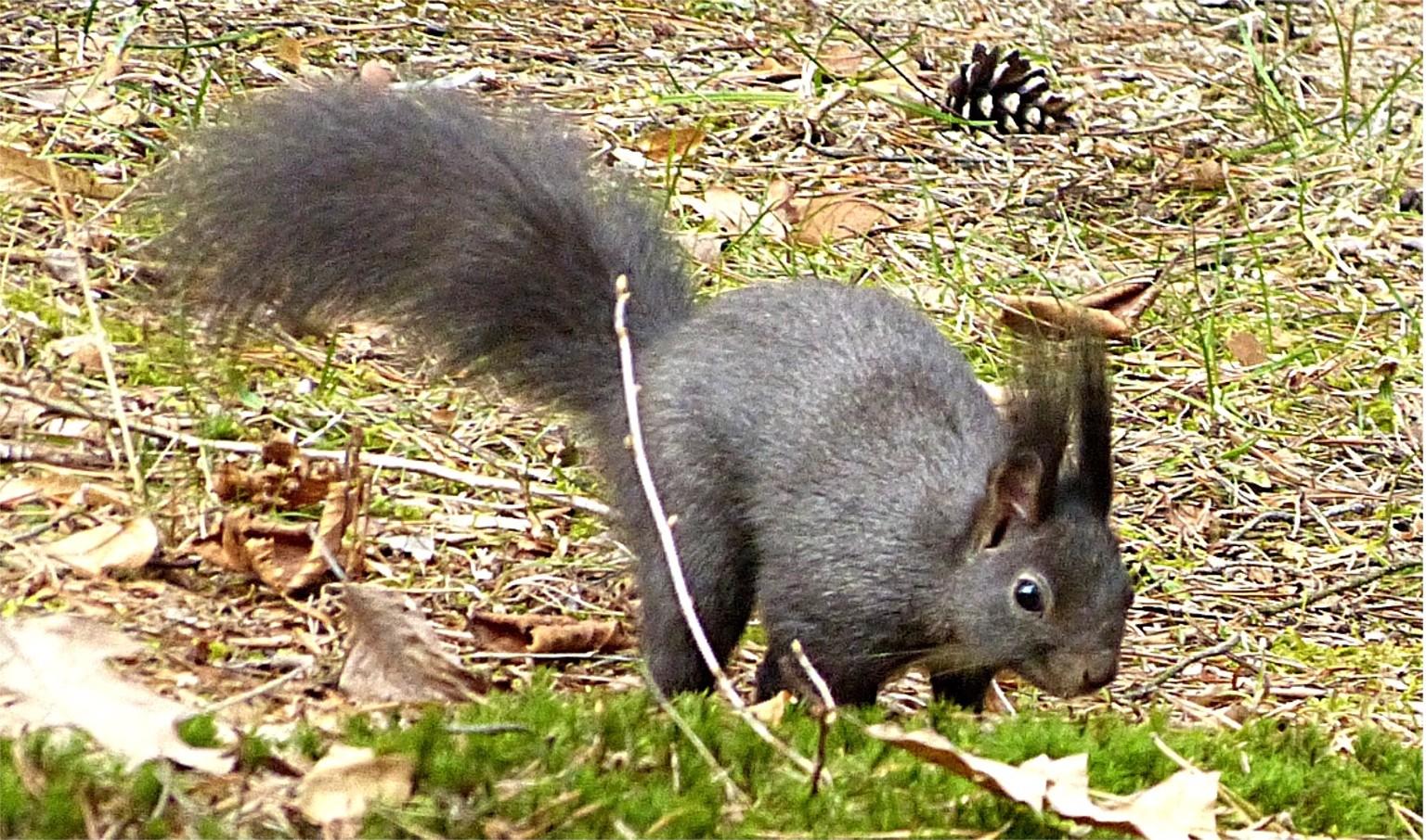Hörnchen 1