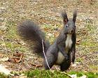 Hörnchen 2