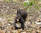 Hörnchen 3