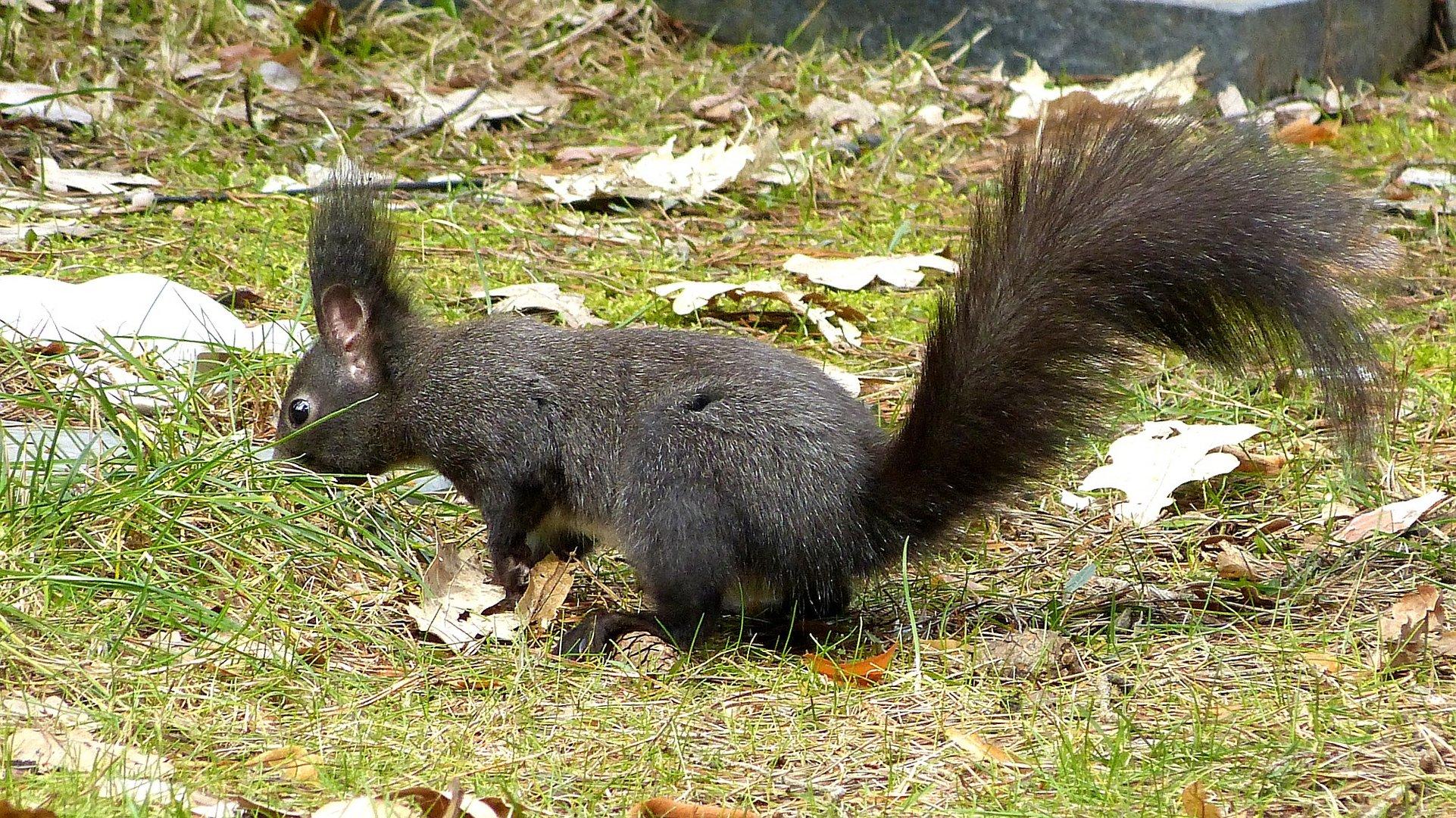 Hörnchen 4