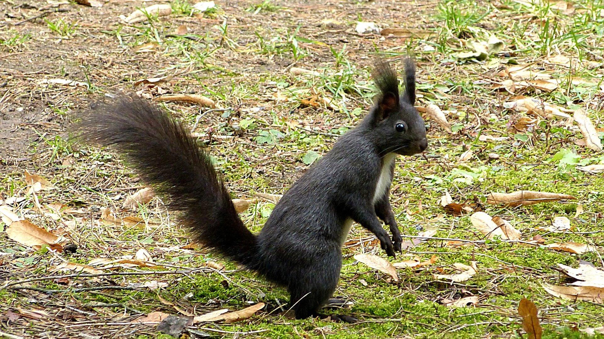 Hörnchen 5