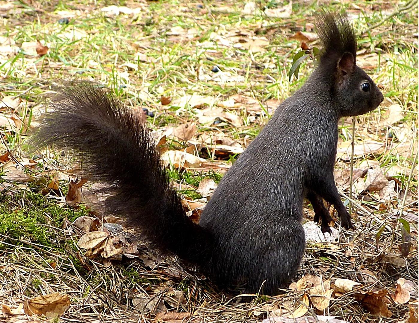 Hörnchen 7