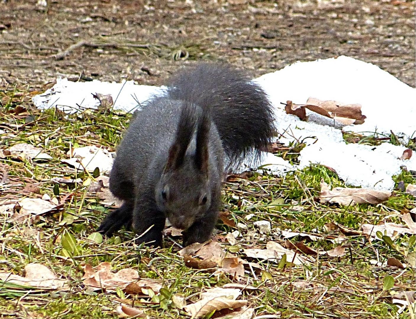 Hörnchen 8