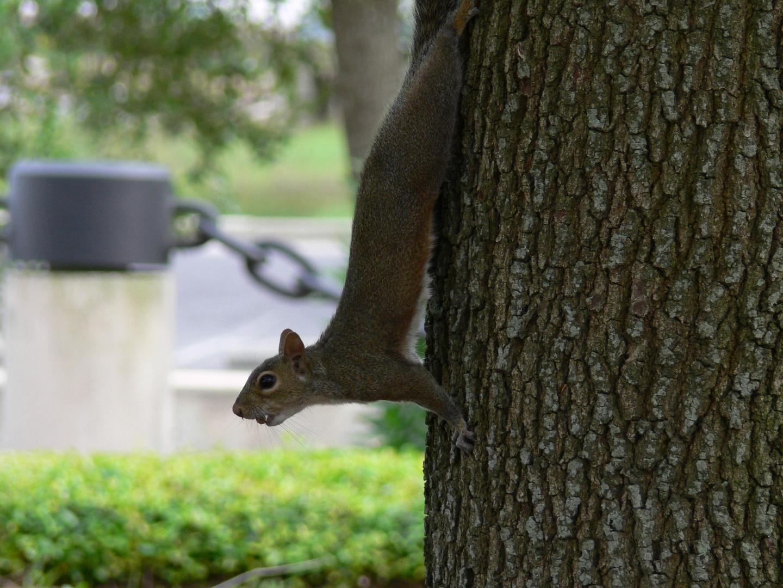 Hörnchen beim Nahrungsammeln.