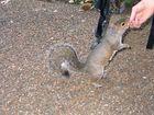 Hörnchen-Fütterung