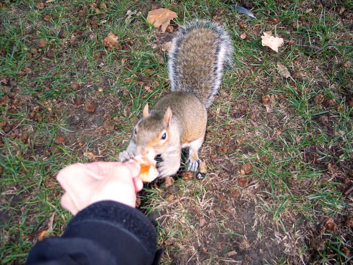 Hörnchen-Fütterung - die 2.
