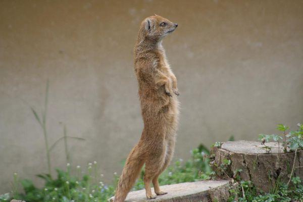 Hörnchen macht Männchen