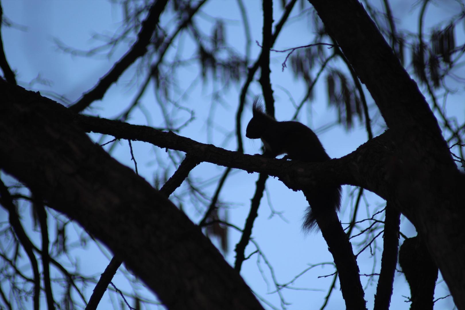 Hörnchensilhouette