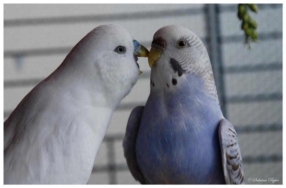 Hörst du mich, ich liebe dich!!
