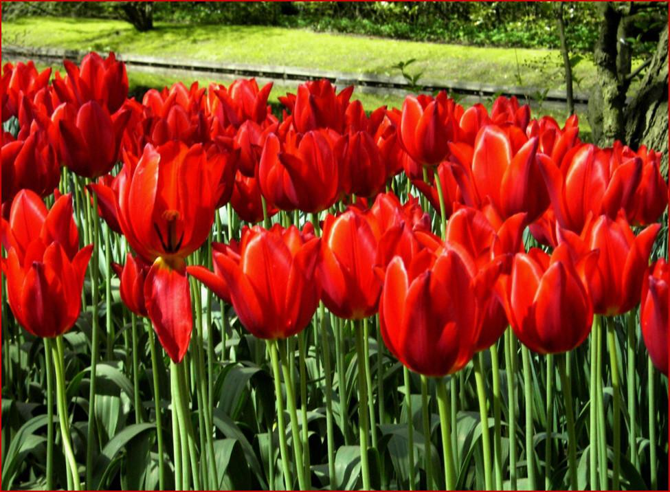 Hoffen auf den Frühling 3