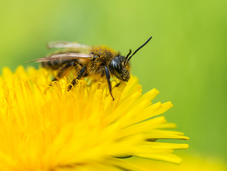 Hoffentlich keine Pollen-Allergikerin :-D