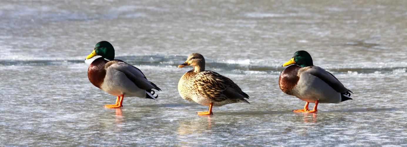 """... hoffentlich nicht festgefroren ...   oder       """"Bodyguards"""""""
