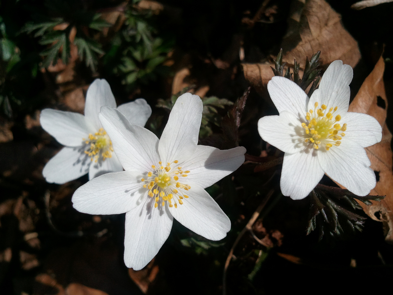 Hoffentlich wird bald Frühling!