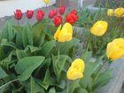 Hoffentlich wird es bald Frühling