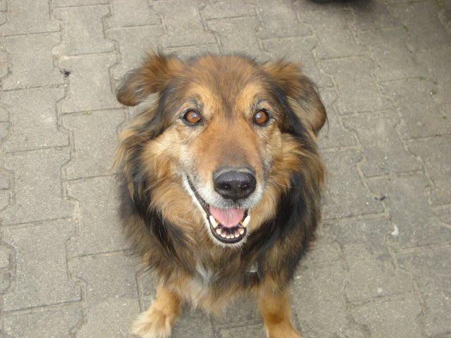 Hofhund Bonny