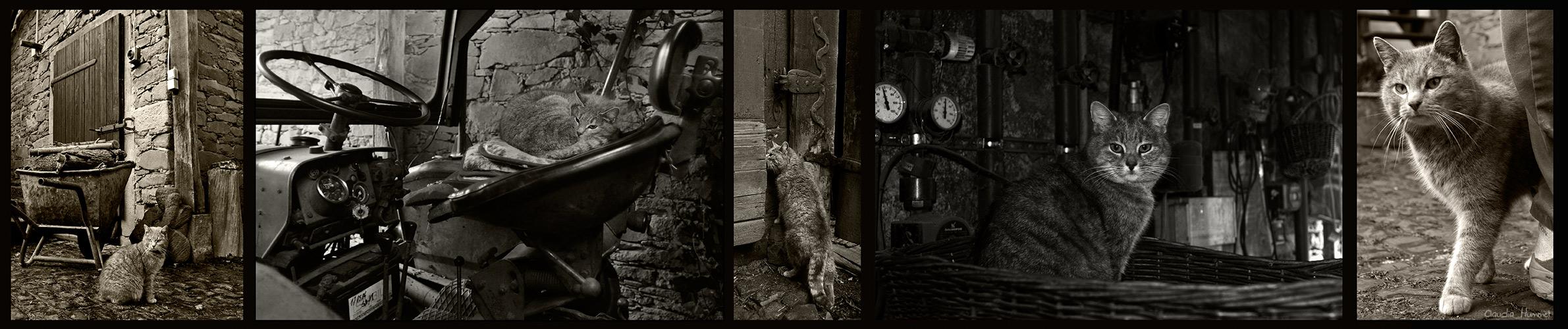Hofkatzen-Panoramastrip .... speziell für Elisabeth :-)