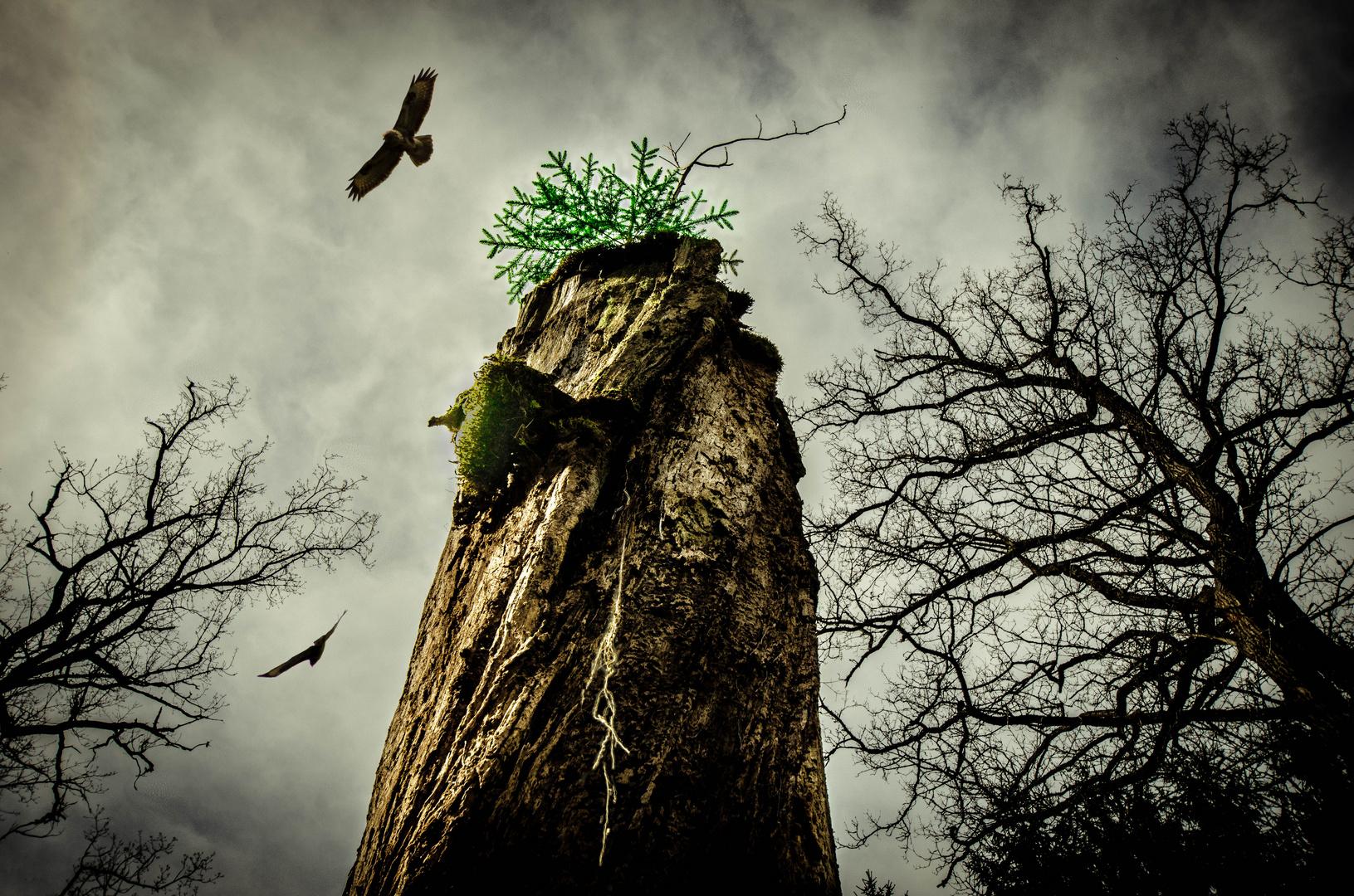 Hoher Baumstumpf