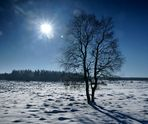 """"""" Hohes Venn """" - 18 - """" Wanderung im Winter """" - """" Gegenlicht """""""