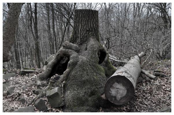hohler Baumstumpf