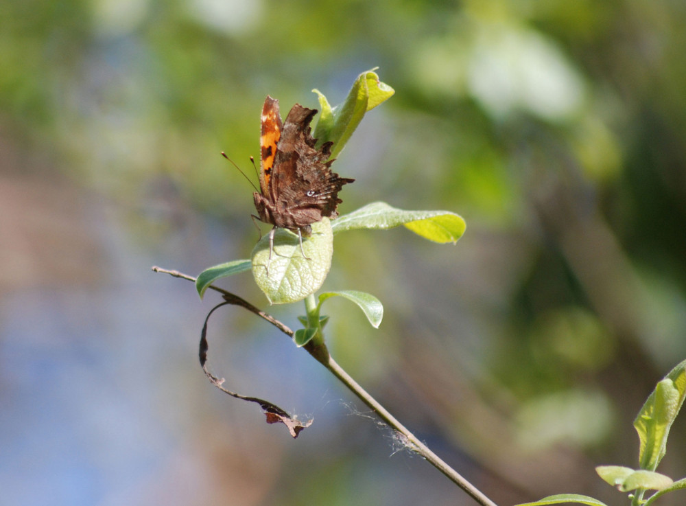 hoja o mariposa ?????'