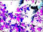 hojas ---