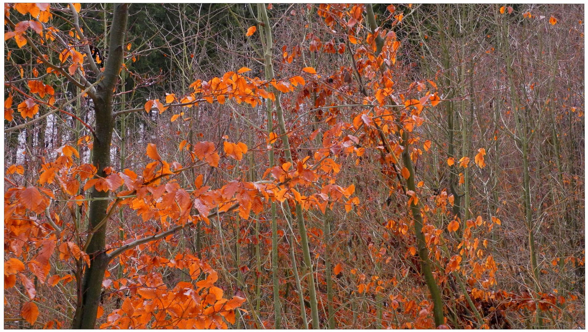 Hojas coloridas, hoy en el bosque (bunte Blätter)