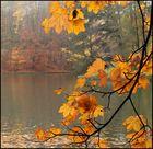 Hojas en otoño 1