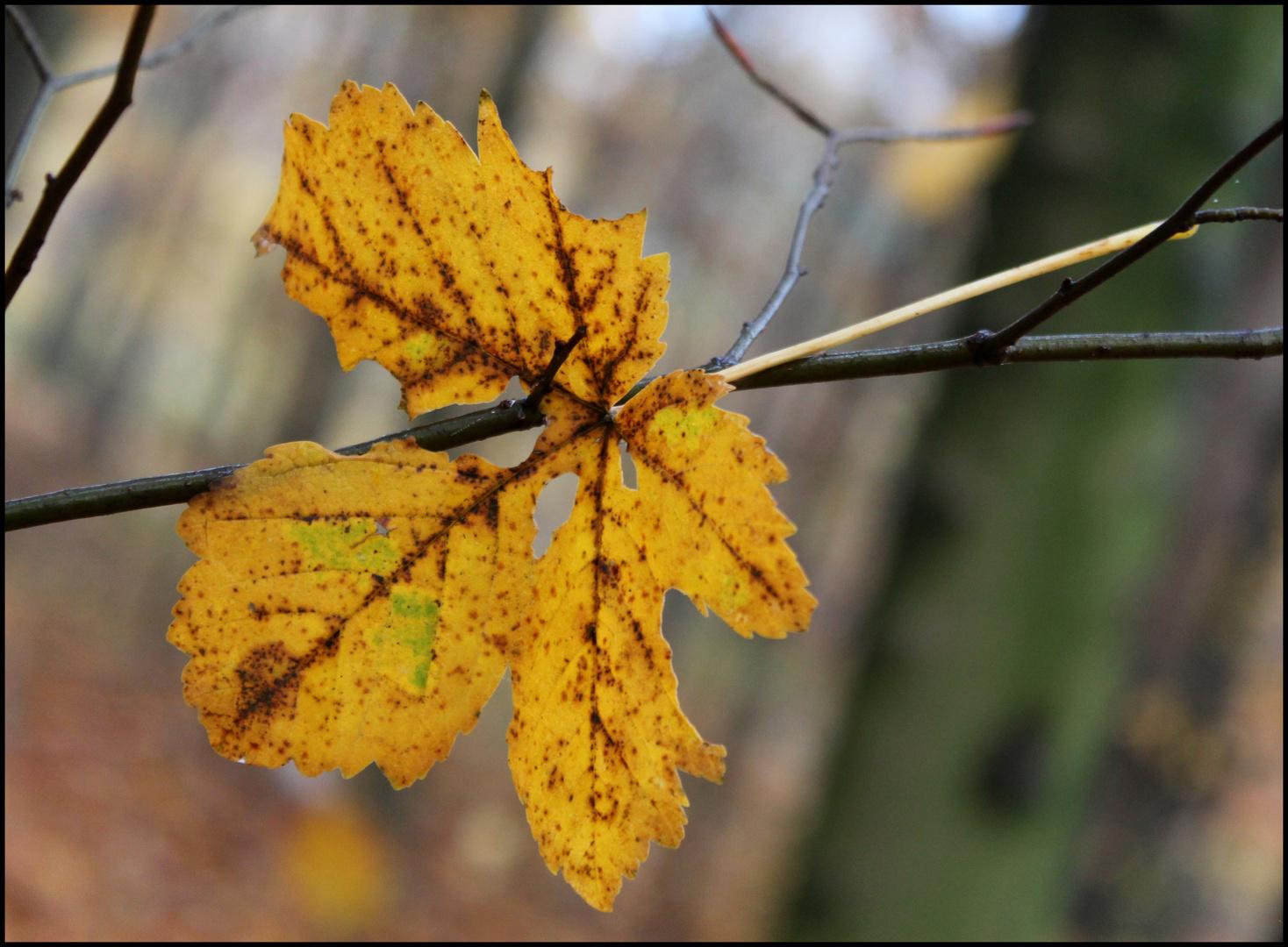 Hojas en otoño 2