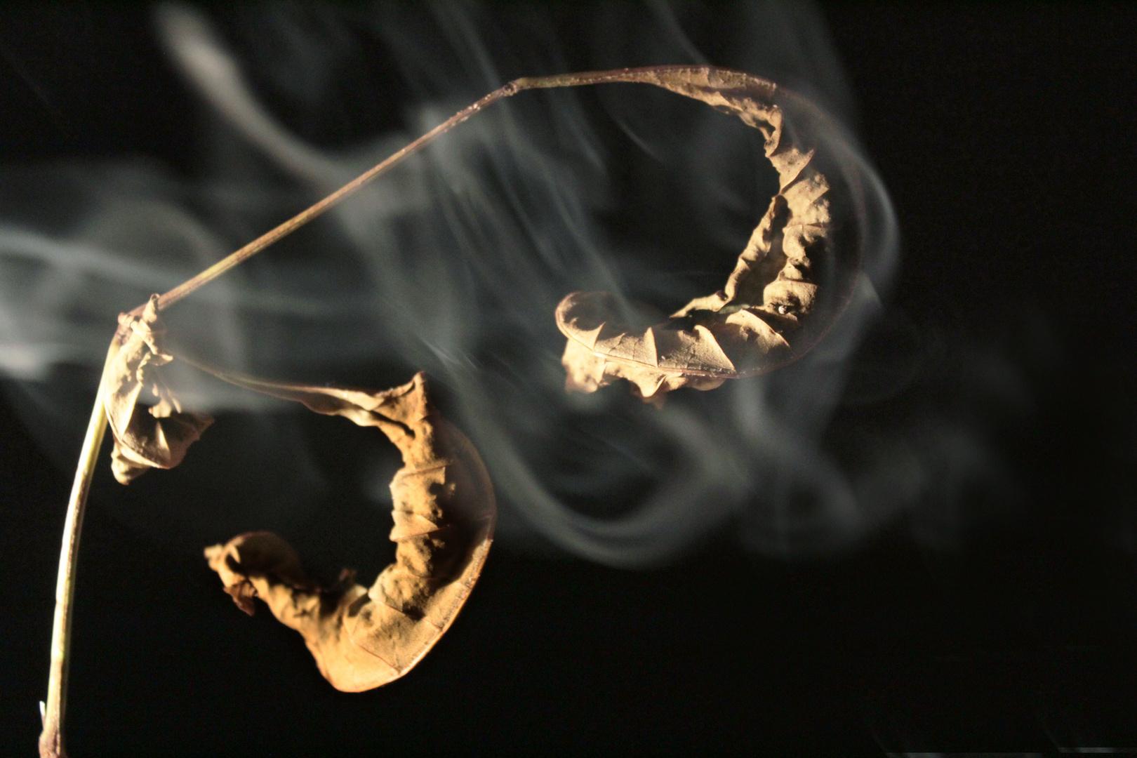 Hojas y humo