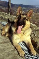 Holf cucciolone...
