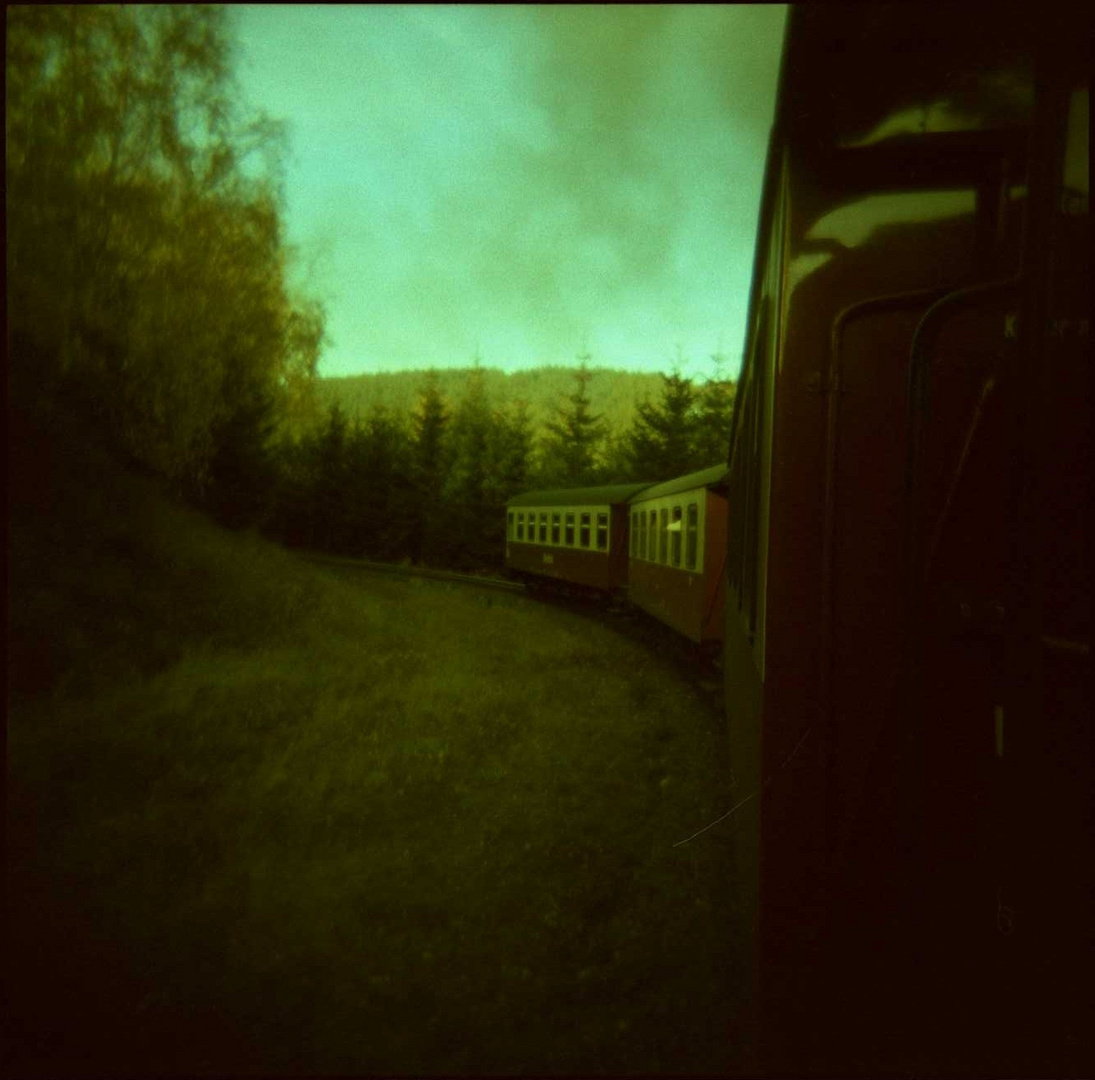 Holga: Into the Woods.