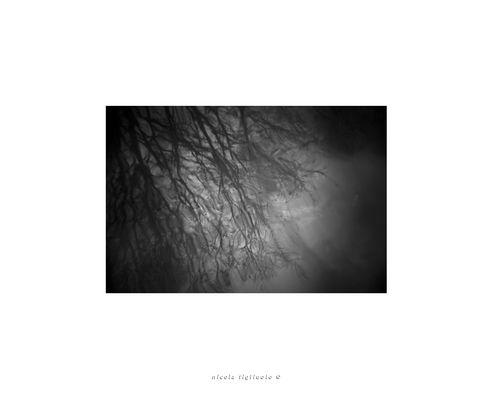 Holga lens series (2/)