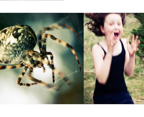 Holiday in Arachnophobia