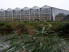 Holland auf dem Lande: Gewächshäuser! (ned.: Kassen)