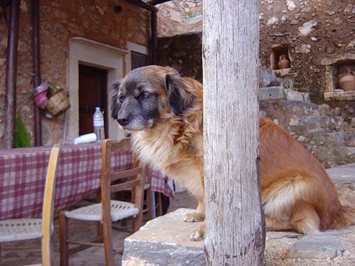 Holly Dog