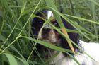 Holly mein Hund