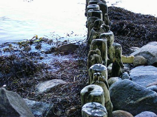 Holnis - Wasser, Steine, morsches Holz