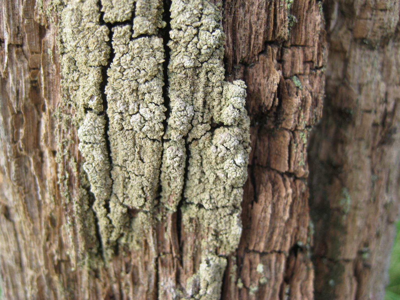 Holz 2
