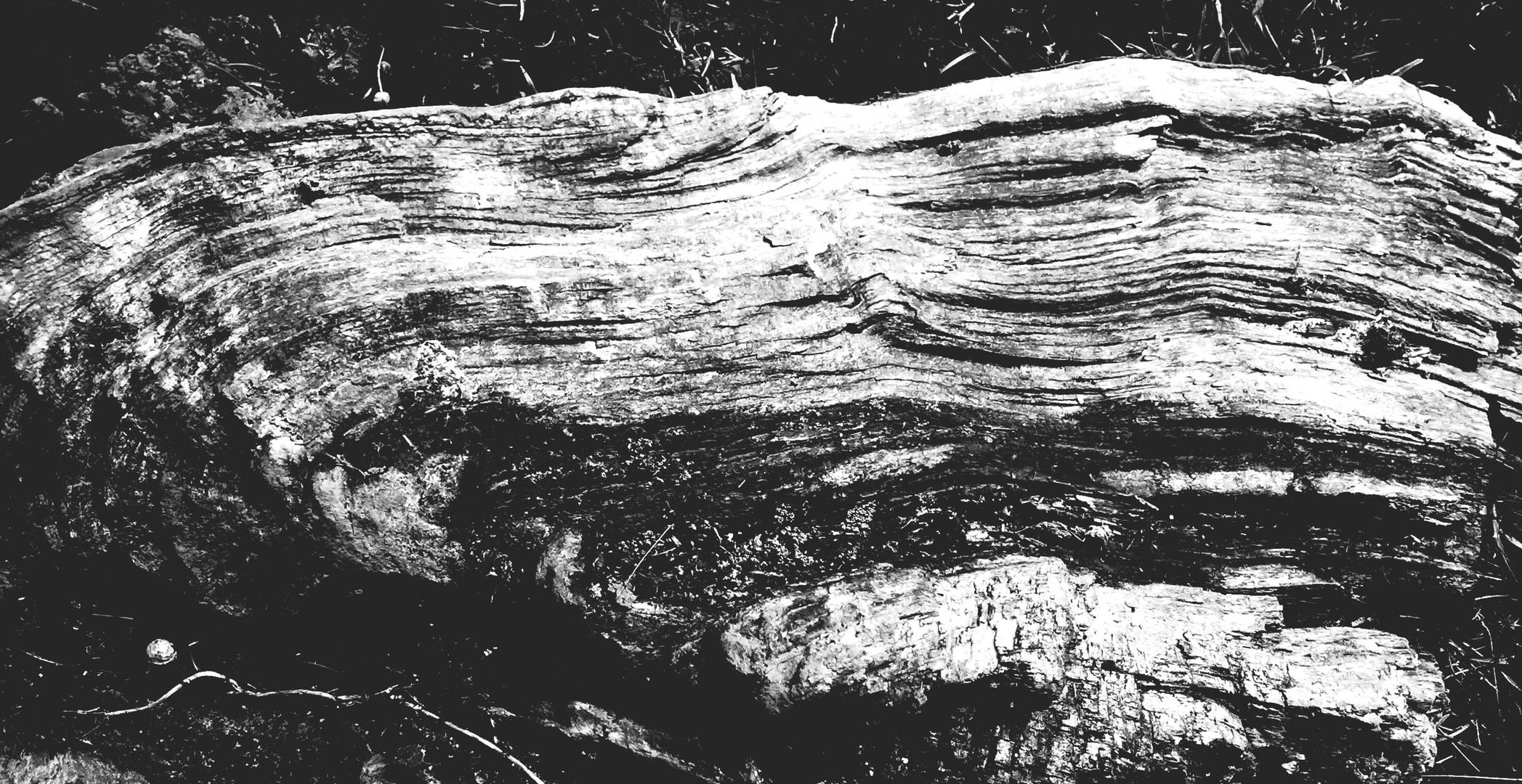 Holz 8