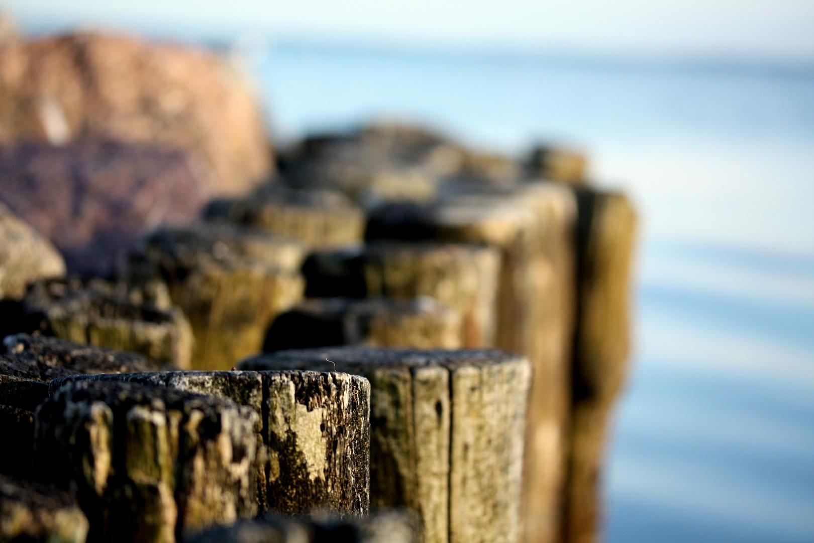 Holz am Wasser