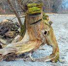 Holz-Elefant