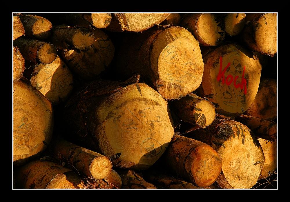Holz für Herrn Koch