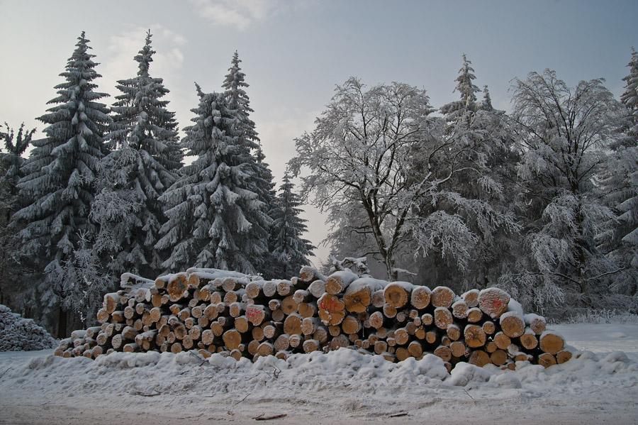 Holz in seinen verschiedenen Erscheinungsformen