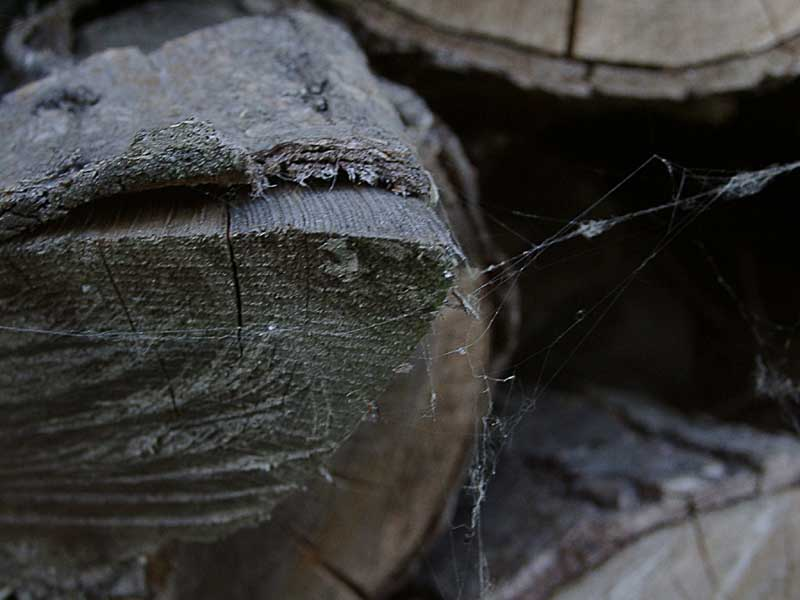 Holz mit Spinnwebe