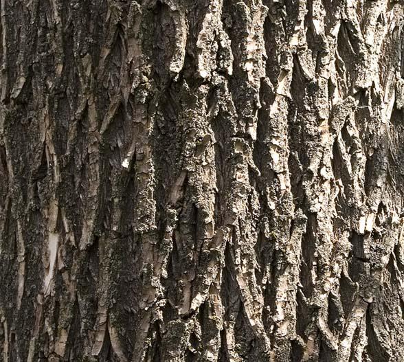 Holz Rinde_1
