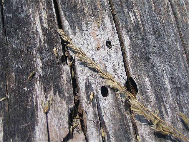 Holz und Korn