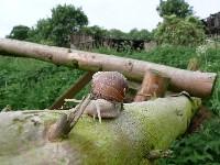 Holz unter Mister Schneckogerisch